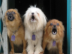 Petrainer 330 Dog No Bark Collar