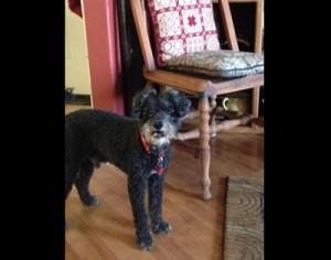 Epica Remote Dog Training Collar
