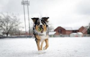 esky remote dog training shock collar